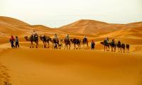 group camel trek led by Berber nomad Tuareg sand dunes Sahara Desert southern Morocco