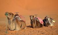 Camel ride in sand dunes Sahara Desert Morocco