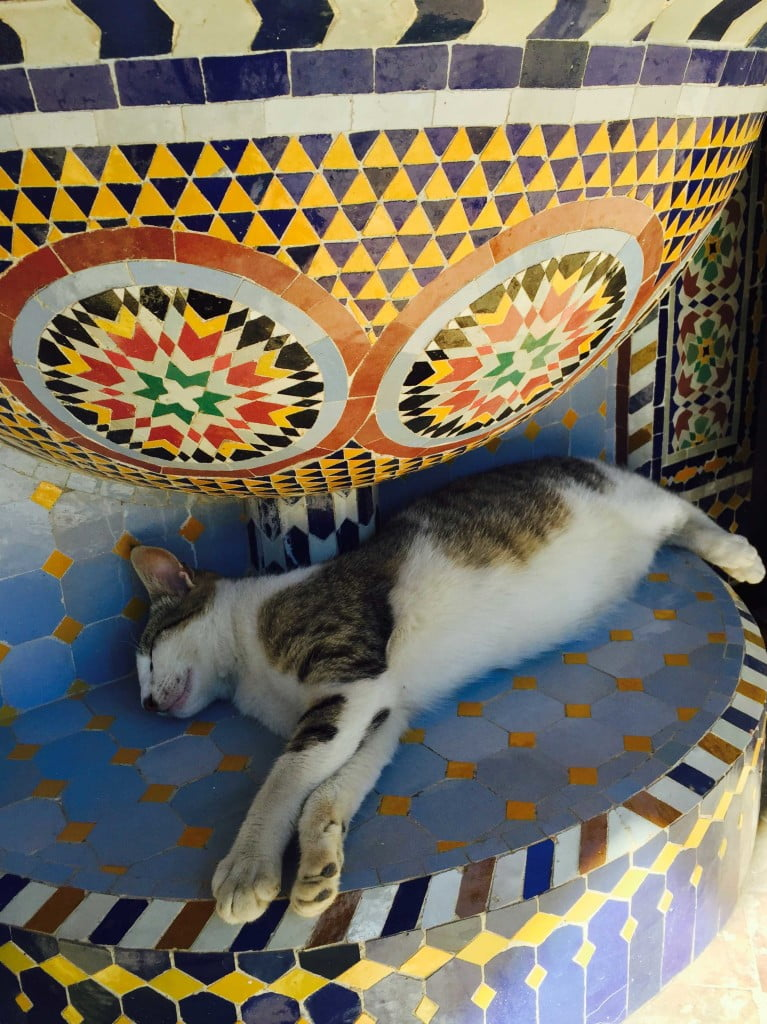 Sleeping Cat traditional Moroccan tile zellige fountain Pottery Village Fes Morocco